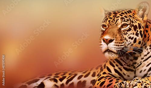 Fototapeta Lying Leopard on Rock, Illustration