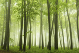 Foggy forest during spring