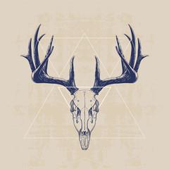 czaszka jelenia