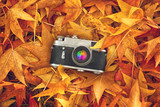 Fototapeta Vintage Photo Camera in Dry Maple Leaves