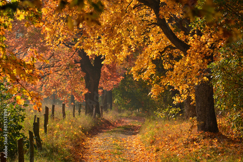 Sunny Autumn country scene © puchan