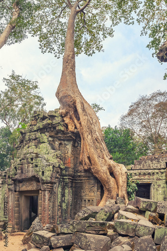 Poster Ta Prohm Temple ancient tree roots, Angkor