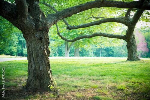 Zdjęcia na płótnie, fototapety, obrazy : Lovely summer trees and grass in park setting