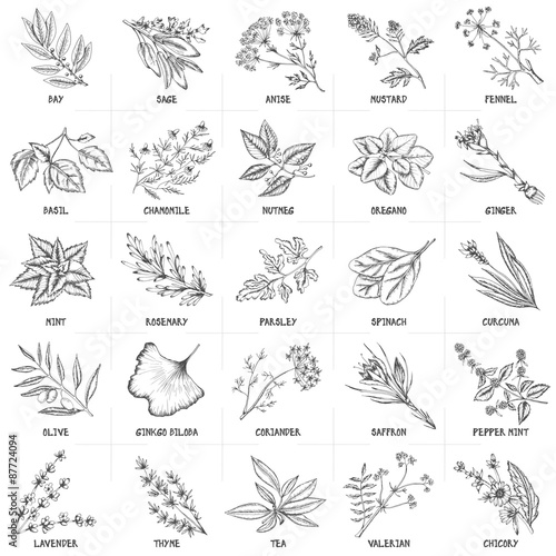 Hand drawn vector set of herbs and spices vintage illustrations.
