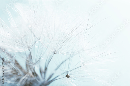 Beautiful dandelion with seeds, macro view - 87775661