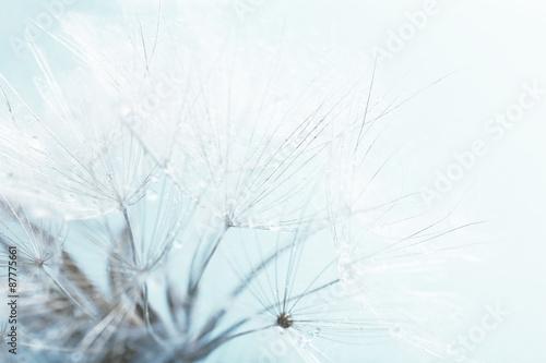 Beautiful dandelion with seeds, macro view - 87775661