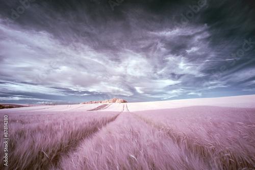 Stunning surreal false color infrared Summer landscape over agri