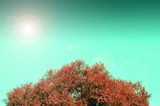 Autumn tree with sun light - background with space for text or other things