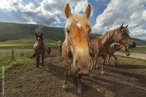 Quadro Gruppo di cavalli in una fattoria. Cielo con nuvole sullo ...