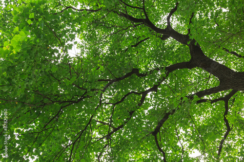forest trees, nature green backgrounds - 87822450