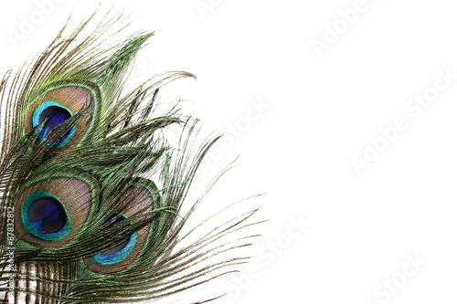 Plexiglas Pauw Peacock Feather