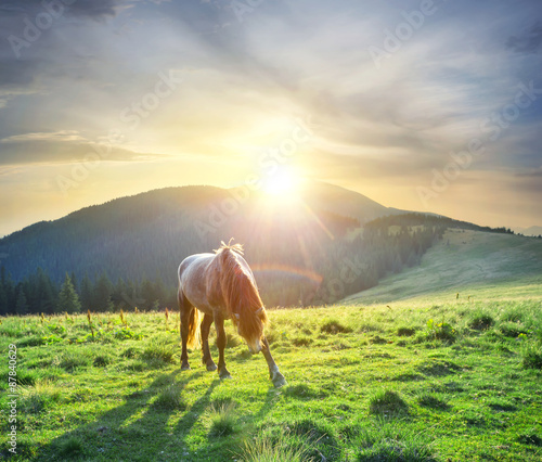 Horse on background of mountains and  sun