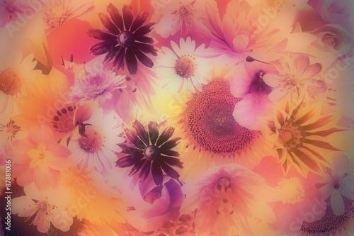 Obraz na Szkle romantic soft flowers background