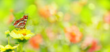 Fototapety Summer  -  Garden with beautiful flowers and butterfly