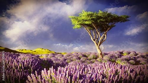Lavender fields  - 87920673