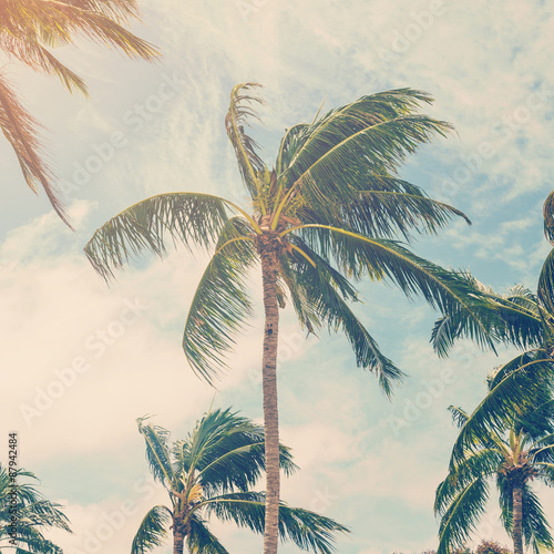 coconut plam tree on beach of nature background in vintage style - 87942484