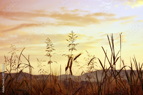 Meadow in the sunset golden light Canvas-taulu