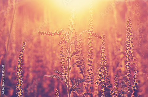 Meadow in the sunset golden light, meditative background Canvas-taulu