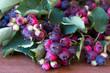 Bunch of first wild autumn berry, Saskatoon in front of dark wooden background