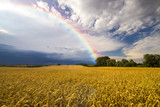 Fototapety colorful rainbow after the storm passing over a field of grain