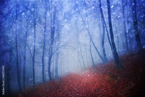 Fantasy blue light seasonal snowy and rainy foggy forest scene with red leaves on floor.