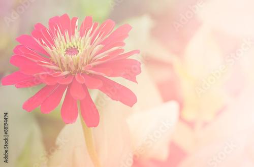 Flower background 1