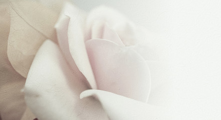 sweet color roses in soft and blur style on mulberry paper texture