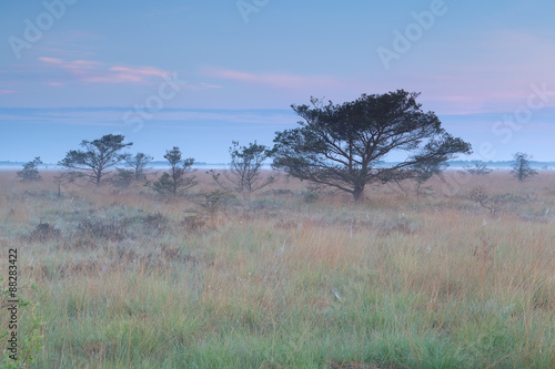misty summer sunrise on marsh - 88283422