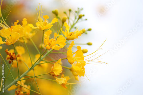 beautiful vintage flowers soft focus background © boonchuay1970