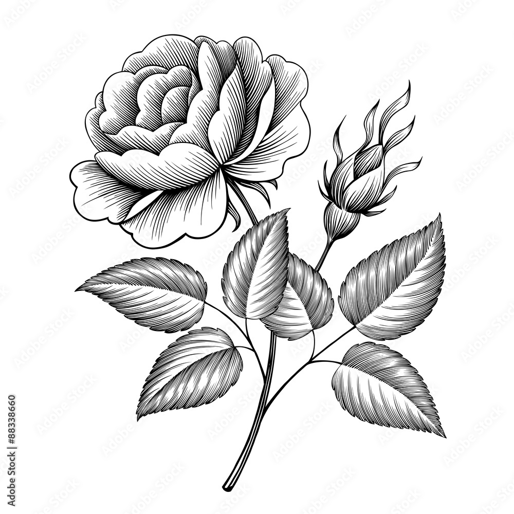 Vintage rose flower engraving calligraphic victorian style tattoo vintage rose flower engraving calligraphic victorian style tattoo botanical illustration wall sticker amipublicfo Gallery