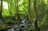 Fototapety rivière en foret