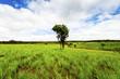 ������, ������: Road of savanna Field in green season