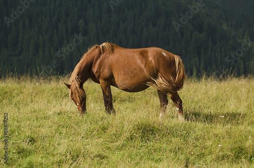 Magic horse © Roxana
