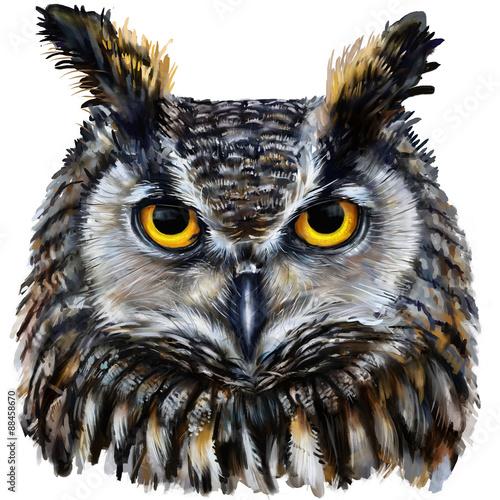 eagle owl digital painting / eagle owl head - 88458670
