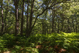 Bosque de robles y helechos. Parque Natural Lago de Sanabria, Zamora.