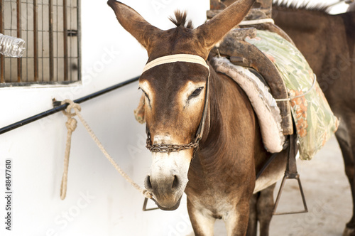 Donkey in Lindos, Greece