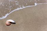 Nautilus seashell on water background