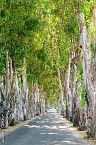 droga-eukaliptusa-rodos-grecja