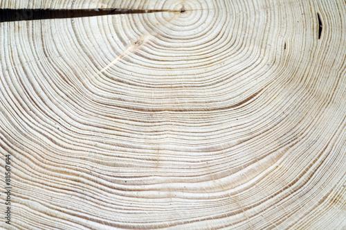 Leinwanddruck Bild Jahresringe; Fichte; Picea; abies; Rottanne; Jahrring; Holzring;