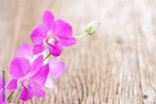 Pink orchid plants on wooden table