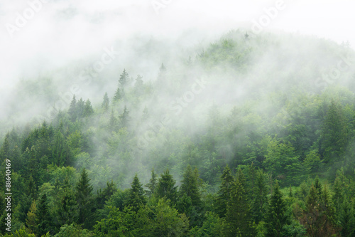 Misty  forest  - 88640469