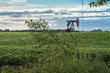Rural Alberta: 1Oil Pump jack in the middle of potato field