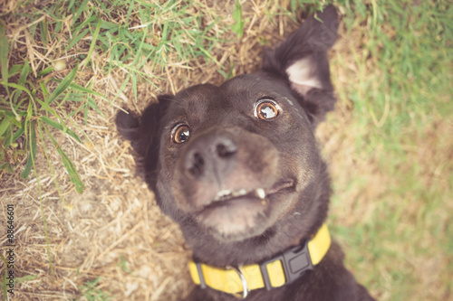 Poster Mixed breed dog selfie photo
