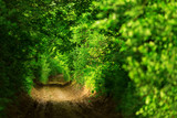 Fototapety Tunnel -like path covered with bushes and trees with light at the end