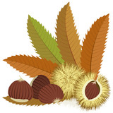 Sweet chestnuts with leaves and spiny husks on white background