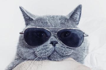 Zabawny morda szary kot w okulary