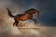 Bay horse in desert dust