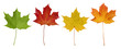 Basic_Maple_Leaves