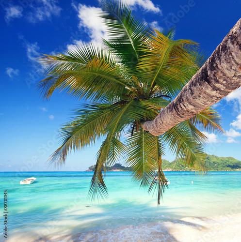 Palme am Seychellenstrand