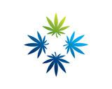 medical marijuana 4